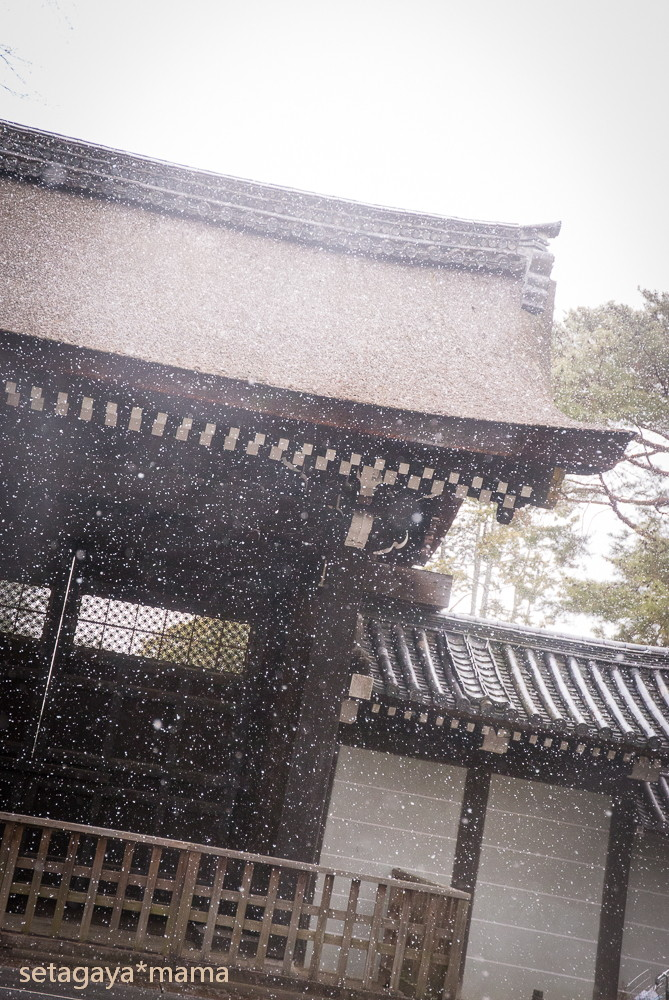 snowing kyoto_MG_4777