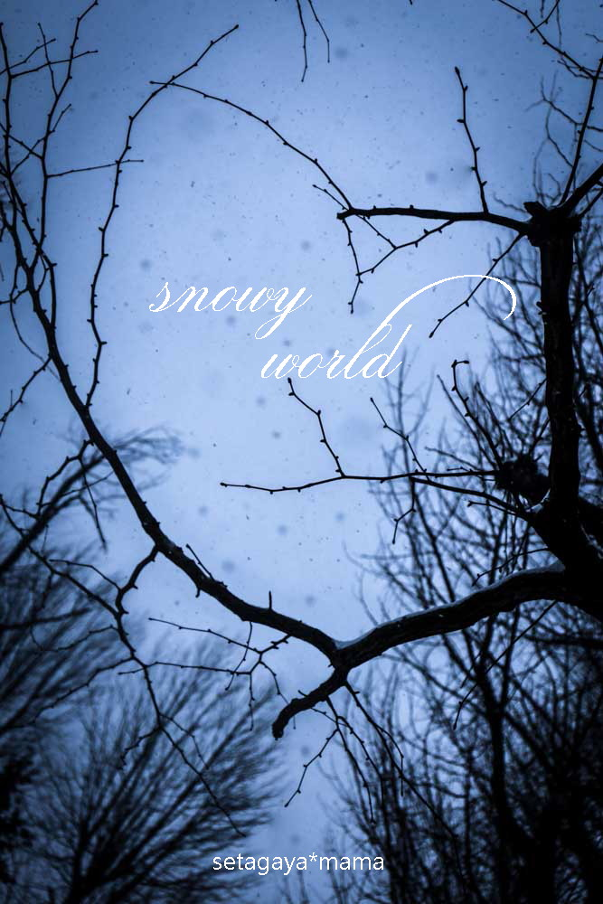 snowy world _MG_2395