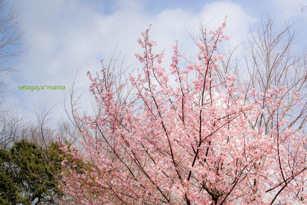 spring _MG_3587