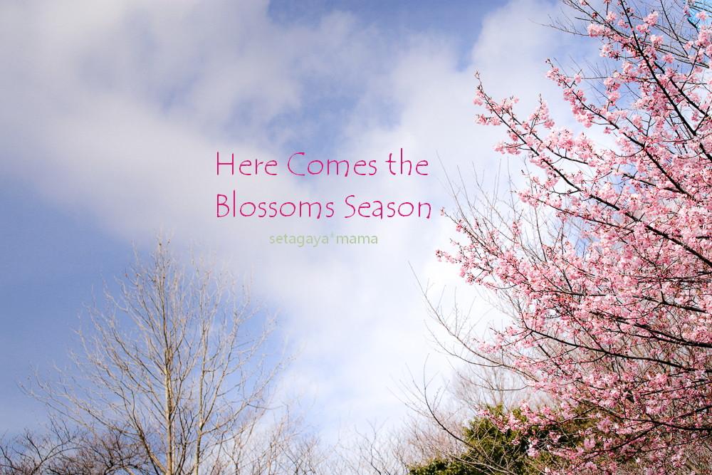 spring _MG_3590