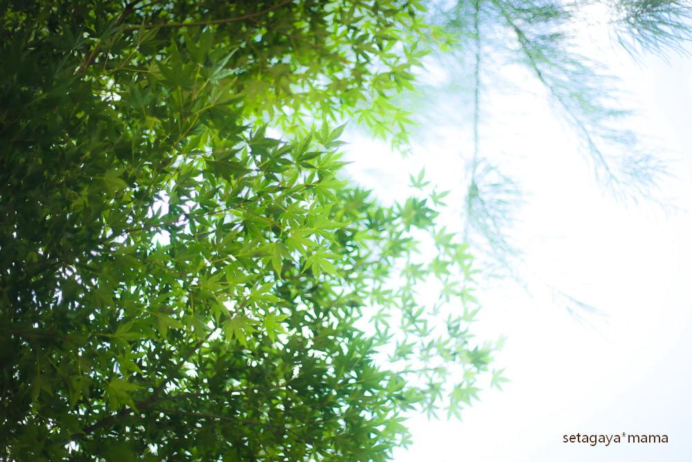 sunny day_MG_2028