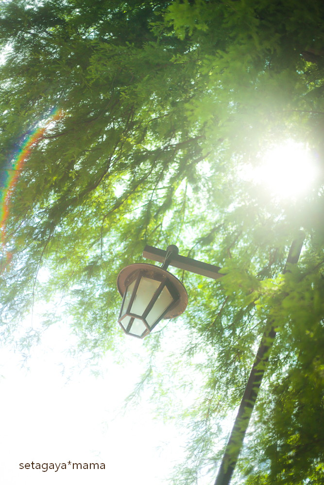sunny day_MG_2032