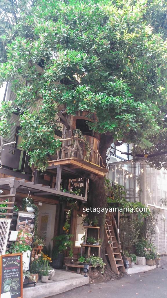 tree NCM_0338