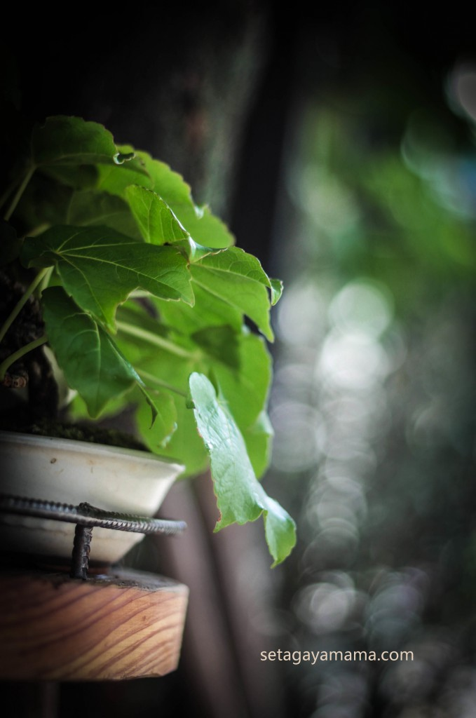 tree f IMG_3495